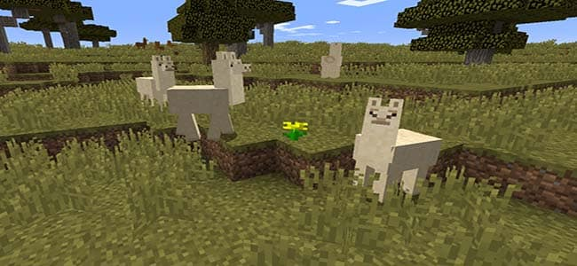 Llamas in Minecraft