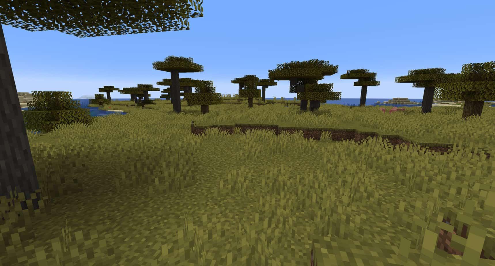 Minecraft Savannah Biome
